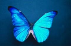blogpapillon.jpg